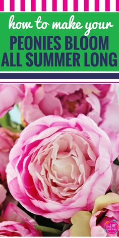Super simple DIY hack for flowers. Love the peonies in your garden - but hate their short blooming season? This simple trick will have your peonies blooming all summer long. Such a great idea.