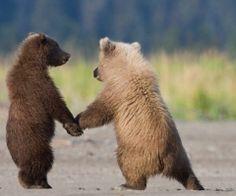 I love you, baby bear