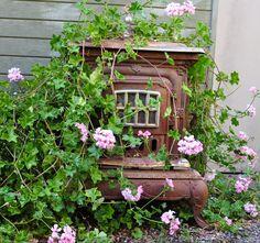 Boy, that ivy geranium sure loves that old stove.