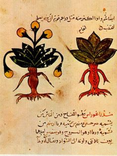 Surgical, medical and anesthesia in the middle east - reference to the mandrake plant for medicinal purposes.