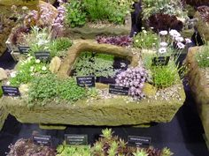 Troughs containing alpine plants. Gardening Scotland 2013.