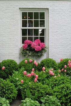 Beautiful window box of hydrangeas!