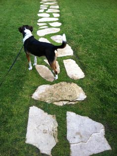Irregular Stone Walkway with Dog - Tan (may be better than slate grey)