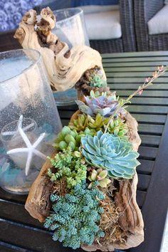centre de table de jardin en bois flotté et succulentes