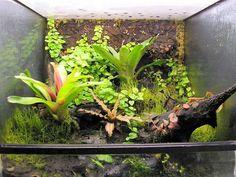 tropical terrarium plants - getting ideas for my crested gecko enclosure