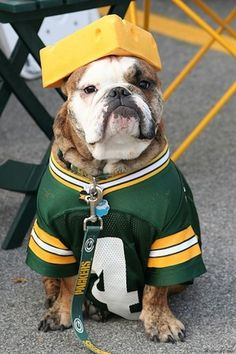 Green Bay Packers | Community Post: 30 Dogs Who Are Ready For The Super Bowl