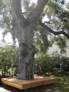 Vlonder om boom in L vorm
