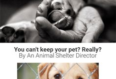 So You're Thinking About Giving Up Your Pet? You Might Want to Reconsider.