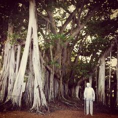 Thomas Edison looks out from under his impressive Banyan tree | by @krist3n, Statigram