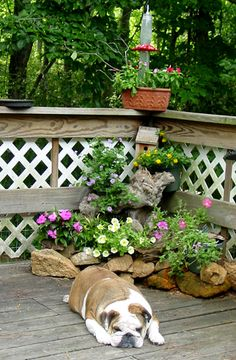 This was in the garden section, but I like the dog!! cozy corner rock garden