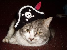 Kitty Cat Pirate Hat