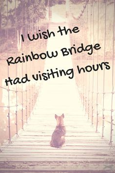 I wish the Rainbow Bridge had visiting hours....
