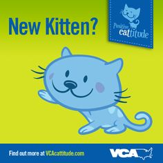 We've got some great kitten care tips for you! Take a look. #VCACattitude