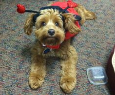 How to Give Your Pets a Safe and Happy Halloween