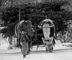 Life in Alba County , Romania