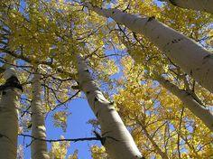 Top 10 des arbres hors du commun dans le monde (c'est autre chose que ton ficus oui)