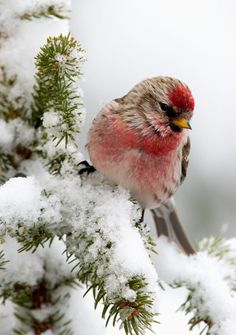 Beautiful photography of winter birds Pretty Birds, Love Birds, Beautiful Birds, Animals Beautiful, Animals And Pets, Cute Animals, Winter Scenery, Winter Colors, Tier Fotos