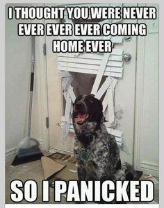#dogsworld
