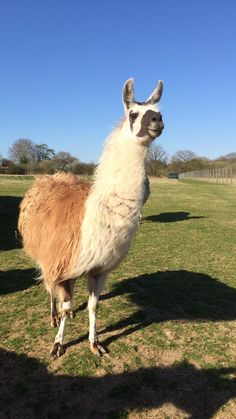 Blue skies and llamas | Elaine Hillson Author and Researcher