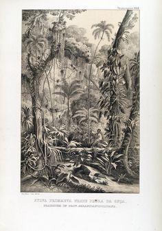 """johann baptist von spix (1781-1826) & carl friedrich philipp von martius (1794-1868) - in """"reise in brasilien"""", 1823-1831."""