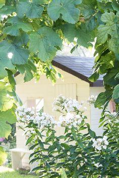 Prairie Charm: Garden in 2017 ~ Záhrada v roku 2017