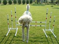 Custom made Dog Agility Equipment - agility items page 2