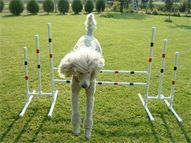Custom made Dog Agility Equipment - agility items page 2