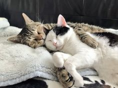 Cute Little Kittens, Kittens Cutest, Cats And Kittens, Cute Cats, Funny Cats, Cat Hug Gif, Baby Animals, Cute Animals, Cat Couple