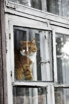 Kitty cat in the window, Photo by mar1gold.