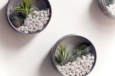 DIY Magnetic wall terrariums  - Gravel (can be found at any pet store in the aquarium section)  - Air plants, cactus or succulents (you will need a small amount of potting soil if not using air plants)  - Moss  - spray paint  - magnetic metal tins (from here or here, you just need to slap magnetic tape on the back!)  - Dremel tool  - painter's tape  - E6000 glue