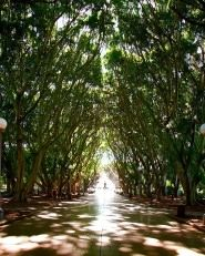 Hyde Park in Sydney, Australia: This centrally located downtown park offers a lush natural setting within an urban environment.  #Travel #Park #Trees #Sydney #Australia