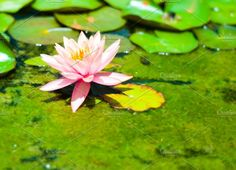 Flower Photos flower by lalipel198