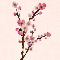 Sakura illustration by Elisabeth Perotin #illustration#sakura#cherry#blossom#flowers#natureParis photography by Elisabeth Perotin #paris#photography#montmartre#autumn#sacrécoeur#etsy#shop https://www.etsy.com/shop/Serpentine?ref=hdr_shop_menu