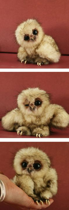 """Fake - It's a baby owl DOLL...It's name is Nascha and sold by www.melisas-bears.com...  - This is what she says about her work...""""I'm very excited to introduce Nascha - a baby owl - to you! Many, many hours went into this baby baby owl. Nascha was so much fun to create and photograph - I hope you love her as much as I do! """" You may see more at her site...(Thanks to @Joyce Ashburn for more images of this one.)"""