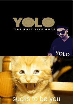 """I'm confused.. so in his ONE life he has been """"wheelchair Jimmy from the rough hoods in Canada"""" and now """"Drake: rapper from the hood"""".. sounds an awful lot like two completely different lives to me. YOLT!      ..cat wins."""