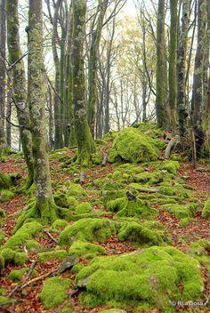 Quinto Real -  Valle de Esteribar  Navarra  Spain  by Rufino Lasaosa, via Flickr