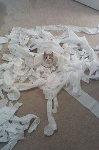 If your cat's favorite activity is using more toilet paper than your entire family combined, tuck it in like so. | 26 Hacks That Will Make Any Cat Owner's Life Easier