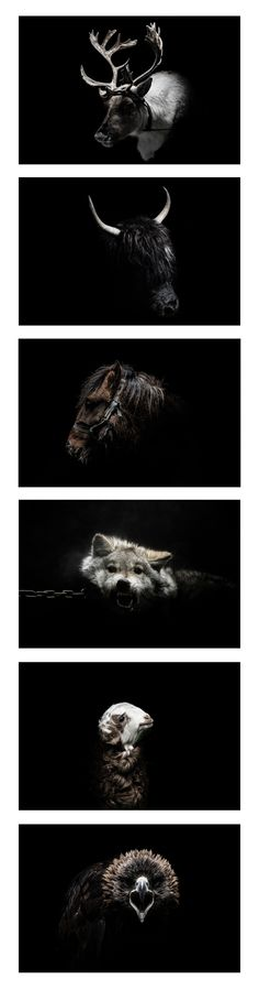 """Selection of """"Gods and Beasts"""" by Rémi Chapeaublanc (Mongolia)"""