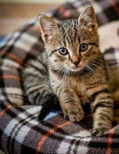 National Cat Day was founded in 2005 by Pet and Family Lifestyle Expert & Animal Welfare Advocate Colleen Paige. The goal was to help people realize how many cats need our help every year. Kittens Cutest, Cats And Kittens, Tabby Cats, Kitty Cats, Funny Animals, Cute Animals, National Cat Day, Cute Cats Photos, Owning A Cat