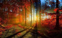 Beautiful Dawn Images7