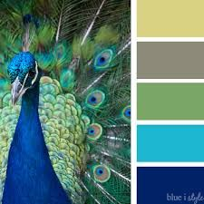 Image result for peacock colors