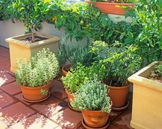 How to grow rosemary all year round - Yahoo!7