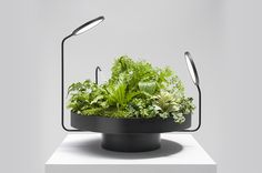 Alien-Like Planter Lights From Goula / Figuera Studio