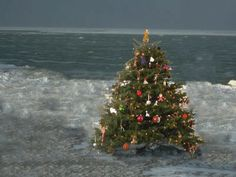 #MerryChristmas. - The perfect Christmas tree? All Christmas trees are perfect! - Charles N. Barnard
