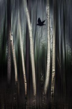 wild moment by Dirk Wüstenhagen on 500px