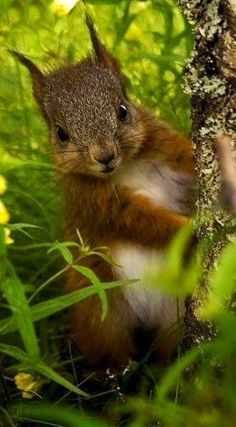 "This is one of my FAVORITE Squirrel pics. To me, this is ""THE"" squirrel to be! Completely photogenic, automatic posing for the camera, TOTAL VOGUE! Cute Baby Animals, Animals And Pets, Funny Animals, Wild Animals, Funniest Animals, Small Animals, Beautiful Creatures, Animals Beautiful, Cute Squirrel"