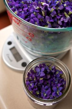 We don't have enough violets for this in our area, but we wish we did! What a wonderful thing for vitamin C, as a cough syrup, or sleep aid.