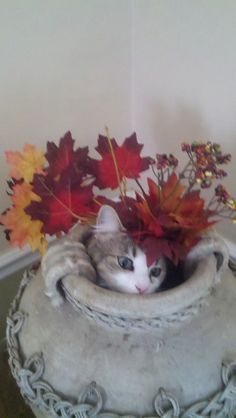 Shy Kitten Hiding in Flower pot...  If life were so easy to hide from. :-)
