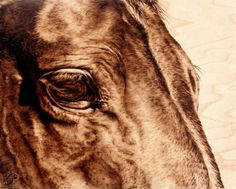 horse portrait by julie bender, created by using hot wire applied to wood, essentially burning the wood with her artistic image
