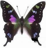 Euphaedra Edwards - Résultats Yahoo France de la recherche d'images